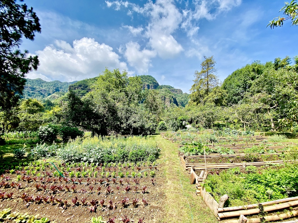 Organic Garden Outdoors Raised Beds Permaculture
